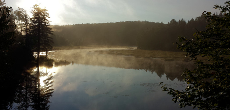 Fog on lake in Algonquin Park