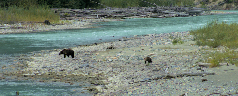Bear viewing from Rip Rap Camp Site platform