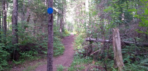 Whiskey Rapids Trail path